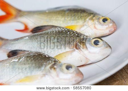 Raw Fish On Dish