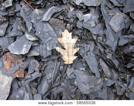 Leaf in riverbed