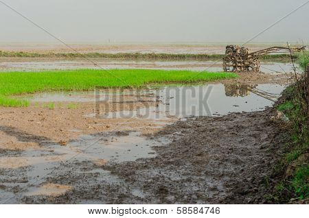 Rice Planting With Tillers Truck