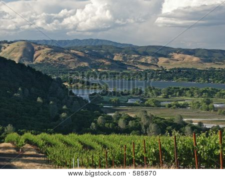 Vineyards At Clear Lake