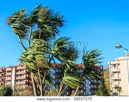 Wind over palm trees