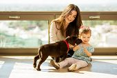 picture of babysitter  - Beautiful little girl and her mom getting some puppy love and kisses from her new brown Labrador - JPG