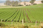stock photo of rich soil  - Field of Carrots in neat rows on rich farmland soil - JPG
