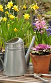 picture of pot  - spring flowering potted flowers in the garden - JPG