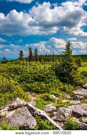 Rocks And Pine Trees At Bear Rocks Preserve, Monongahela National Forest, West Virginia.