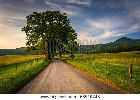 Tree And Fence Along A Dirt Road At Cade's Cove, Great Smoky Mountains National Park, Tennessee.