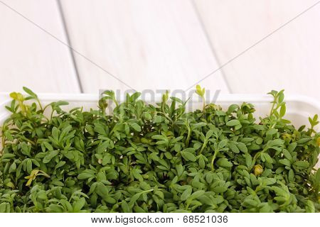 Fresh garden cress in white plastic box close-up on wooden table