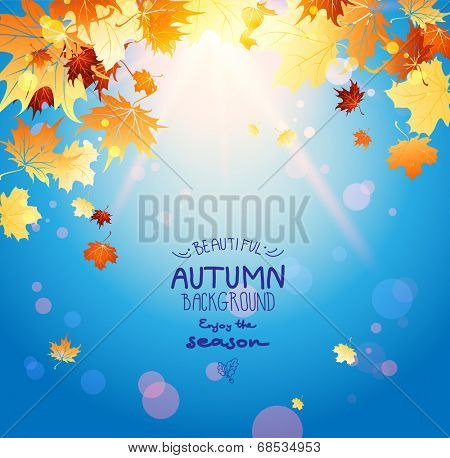 Shining autumn leaves and blue sky with place for text. Beautiful seasonal background