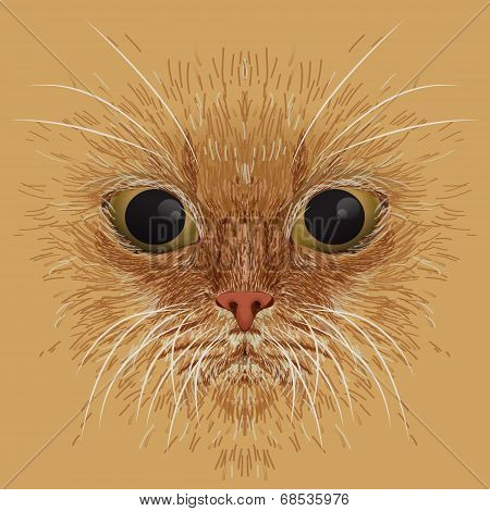 Red cat muzzle Vector background