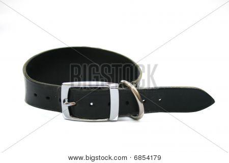 Greyhound dog collar.