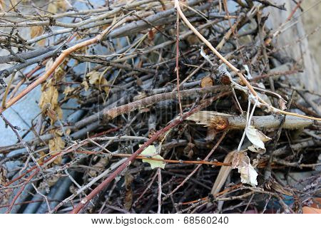 Garden brushwood