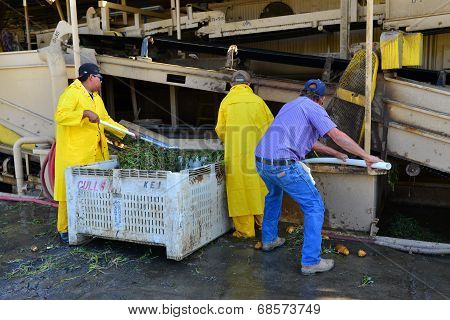 Packing Plant Workers