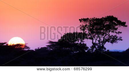 Sunrise in the bushveld (focus on tree) - Kruger National Park