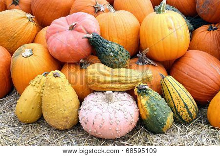 Colorful Bumpy Pumpkin