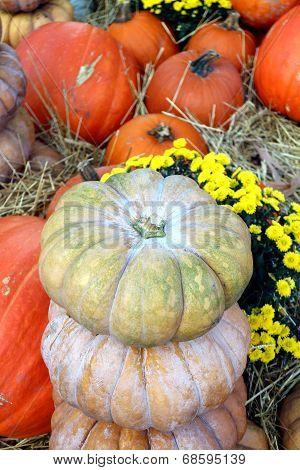 Decorative Bumpy Gourd For Fall Season