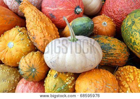 Bumpy Gourd