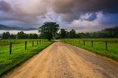 stock photo of cade  - Tree along a dirt road on a foggy morning at Cade - JPG