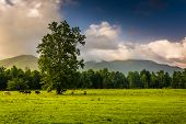 stock photo of cade  - Tree and horses in a field at Cade - JPG