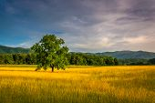 stock photo of cade  - Tree in a field at Cade - JPG