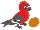 picture of crossbill  - red and black crossbill with a cone - JPG