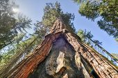 foto of sequoia-trees  - Sequoia Gate in Mariposa Grove of Yosemite National Park California USA.