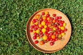 image of picking tray  - Tray of assorted colorful tomatoes from garden on natural grass background - JPG