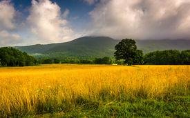 stock photo of cade  - Field and low clouds over mountains at Cade - JPG