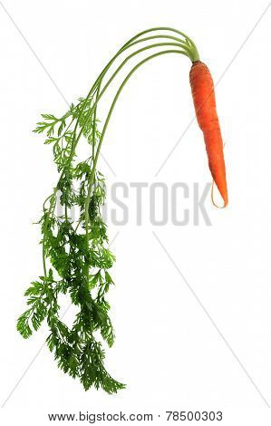 Fresh carrots studio isolated on white background