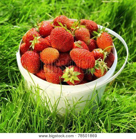 Ripe Strawberry In Basket On Grass