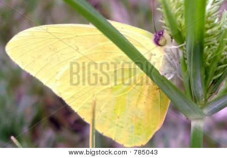 Persevering Butterfly
