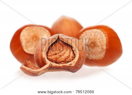 Ripe Filberts