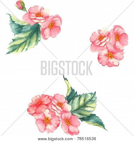 Watercolor illustration with little tender bouquets with pink brier flowers on the white background