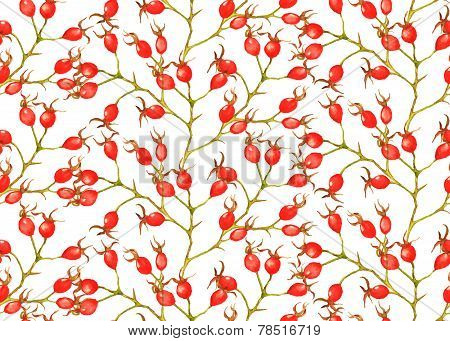 Seamless pattern with watercolor red brier berries on the white background