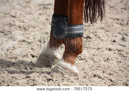Chestnut Horse Legs Close Up With Splint Boots