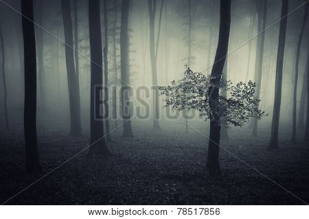 Dark enchanted woods with fog on Halloween