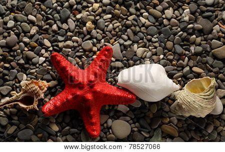 Seastar And Seashells On Pebbles