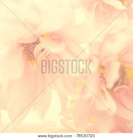 A beautiful light pink color flower background. Extreme close up of petals.