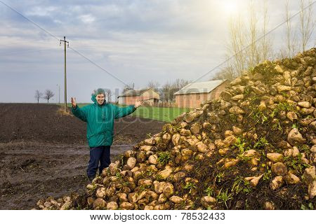 Peasant With Sugar Beet
