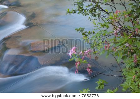 Blooming Stream
