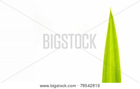 Green Leaf On White Background, Text Caption
