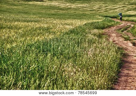 Walking Through Holms Oaks And Green Wheat Fields