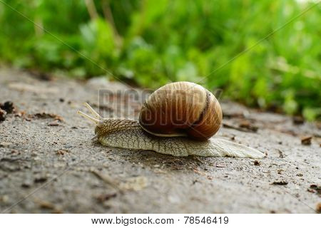 A snail is on sand