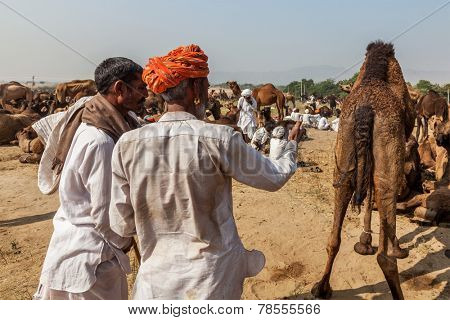 PUSHKAR, INDIA - NOVEMBER 20, 2012: Indian men and camels at Pushkar camel fair (Pushkar Mela) - annual five-day camel and livestock fair, one of the world's largest camel fairs and tourist attraction