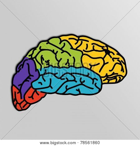 Colorful image of human brain with its part on grey background.