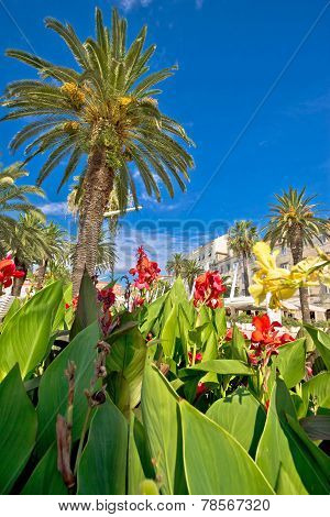 Split Riva Palms And Flowers