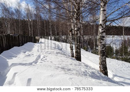 Winter Rural Landscape With Bare Birches