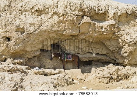 horse in a cave