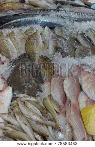 Fresh chilled fish on the counter. Fish Market. Phuket, Thailand