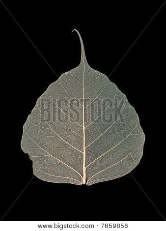 High-resolution image of the leaf with many viens