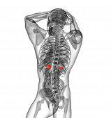 picture of endocrine  - 3d render medical illustration of the human adrenal glands  - JPG